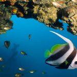 Aqua Vision Dive Centre
