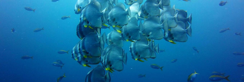 Aqua Vision Dive Centre1